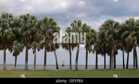 St. Petersburg, Florida, USA. 5th May, 2016. DIRK SHADD | Times .Aaron Freedman, 52, from St. Petersburg, goes for - Stock Photo