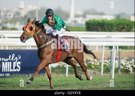 Qatar Racing & Equestrian Club, Doha.  Qatar 5th May 2016.  Pierantonio Convertino wins race 1, the Local Thoroughbred - Stock Photo