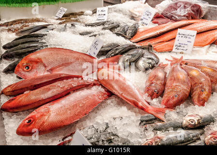 Fishmonger counter with salmon fillets, bass and red snapper on ice - Stock Photo