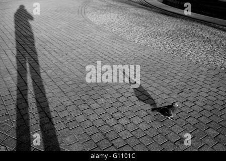 Pigeon walking beside human shadow projected on the pavement - Stock Photo