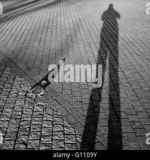 Pigeon beside human shadow projected on the pavement - Stock Photo