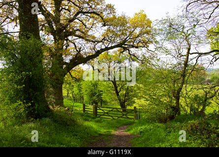 Country lane at Flatford, Dedham Vale, Essex, England UK - Stock Photo