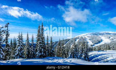 Snow Covered Trees and deep snow pack in the High Alpine of the Shuswap Highlands of central British Columbia, Canada - Stock Photo
