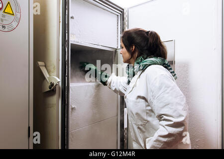 Researcher inspect fungus cultures in the laboratory freezer. - Stock Photo