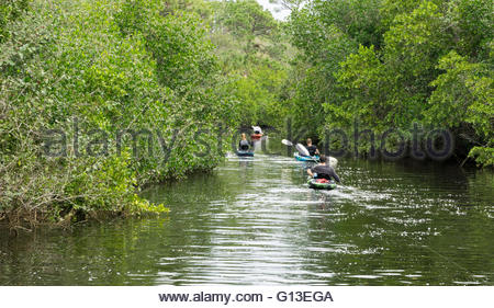 Four kayaks cruise up the Estero River along the Koreshan State Historic Site in Estero, Florida - Stock Photo