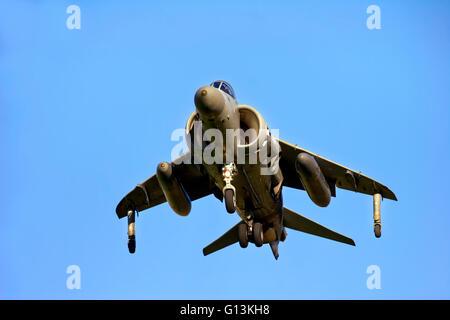 A Royal Navy Fleet Air Arm British Aerospace Sea Harrier F/A.2 XZ440 009 (cn 41H-912003) of 801NAS at RNAS Yeovilton, - Stock Photo