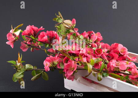 Japanese rose flowers in a box - Stock Photo