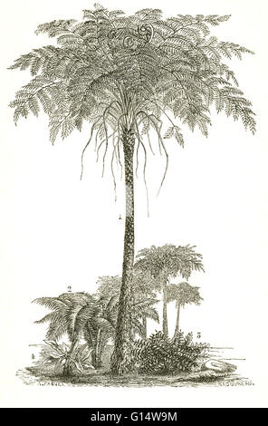 Arborescent and herbaceous ferns from the Carboniferous Period.  Illustration from Louis Figuier's The World Before - Stock Photo