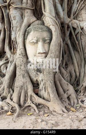 Buddha's head in Bodhi tree roots, Wat Mahathat Temple, Ayutthaya, Thailand - Stock Photo