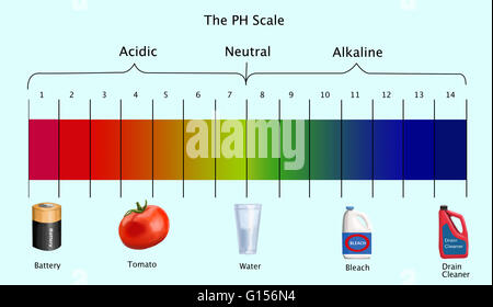 the ph scale diagram illustration stock vector art \u0026 illustration Acid Dissociation Constant diagram of the ph scale with examples of acidic, neutral and alkaline substances