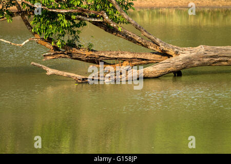 Turtle on a log in a forest - Stock Photo