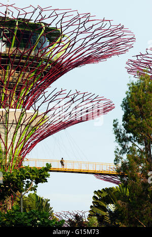 Gardens by the Bay, Supertree Grove aerial walkway, Singapore, Southeast Asia, Asia - Stock Photo