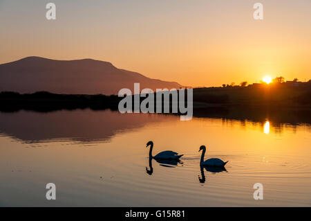 Swan Lake. Two swans on Lake Shanaghan, Ardara, County Donegal, Ireland - Stock Photo