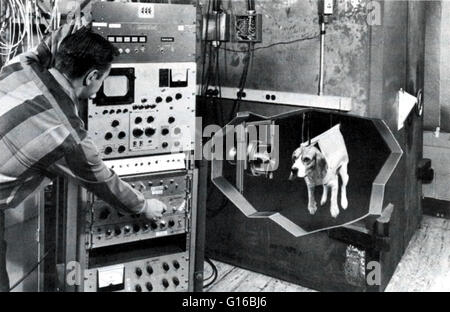 Measurements of fallout nuclides in the body of a dog. Gamma rays are detected by a sodium iodine crystal, which - Stock Photo