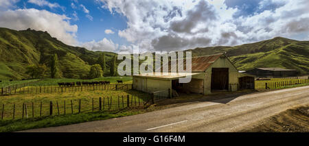 Barn with cows, sorrounded by hills, along the Forgotten World Highway 43 - Stock Photo