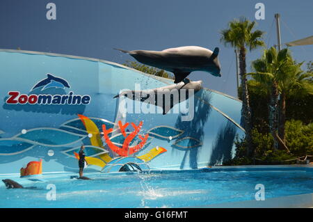 Dolphins at Zoo marine in Guia, Algarve, Portugal - Stock Photo