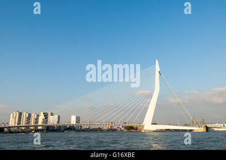 Erasmus Bridge 'The Swan' over New Meuse River in Rotterdam, the Netherlands
