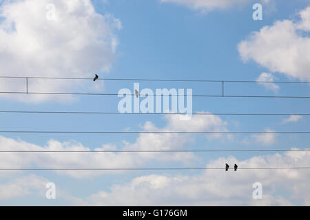 birds sitting on power lines - Stock Photo
