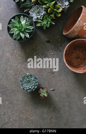 Plants in flower shop, overhead view - Stock Photo