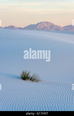Soaptree yucca at sunrise, White Sands National Monument, New Mexico. Stock Photo