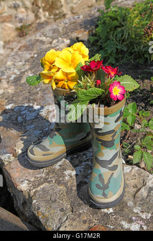 A novelty, a pair of rubber boots planted with primroses sitting on a garden wall in the sunshine - Stock Photo