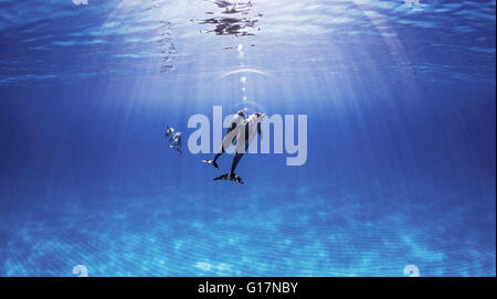 Atlantic Spotted Dolphins swimming near surface of ocean - Stock Photo