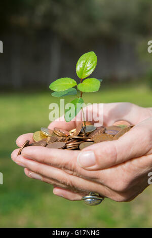 Side view of womans cupped hands holding tree seedling growing from coins - Stock Photo