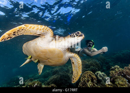 Young woman swimming with rare green sea turtle (Chelonia Mydas),, Cebu, Philippines - Stock Photo