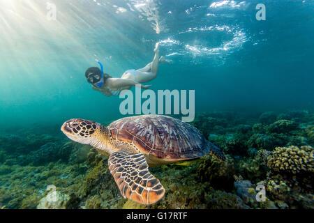 Young woman swimming with rare green sea turtle (Chelonia Mydas),, Cebu, Philippines - Stock Photo