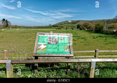 The Westbury White Horse and Information Board, Wiltshire, United Kingdom. - Stock Photo