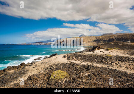Zygophyllum fontanesii (uvilla de mar, sea grape) growing on volcanic rock close to the sea at Malpais de la Rasca, - Stock Photo