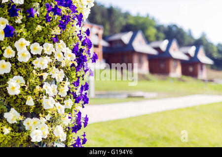 Picture of flowers and cottages in  nature on a summer day - Stock Photo