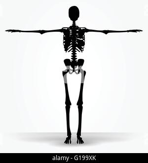 Vector Image - skeleton silhouette in default pose isolated on white background - Stock Photo