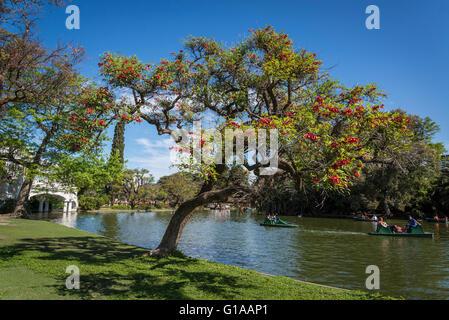 Rose Garden, Rosedal, Parque Tres de Febrero, Bosques de Palermo or Palermo Woods, Buenos Aires, Argentina - Stock Photo