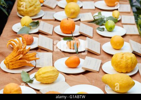 Different types of citrus fruits on a table - Stock Photo