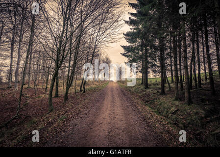 Trail surrounded by trees in a forest at autumn - Stock Photo