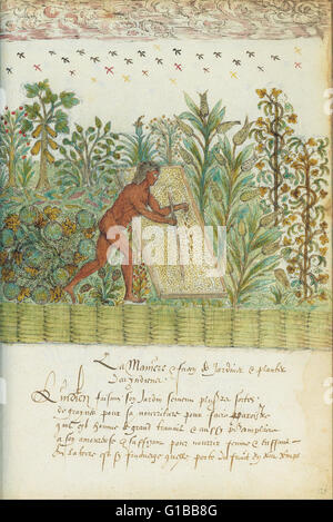 Histoire Naturelle des Indes - The Morgan Library - Stock Photo