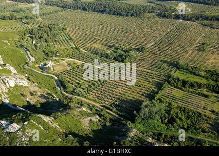 France bouches du rhone maussane les alpilles fields of for Region bouche du rhone