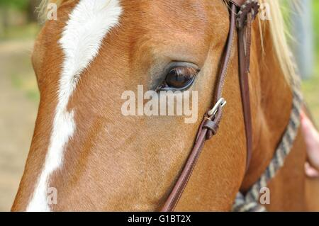 Shot of the eye and left part of the face of a brown horse - Stock Photo