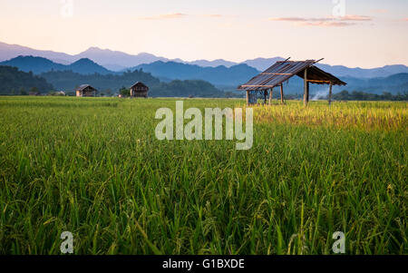 Dusk over the rice paddy fields in Luang Namtha, Northern Laos - Stock Photo