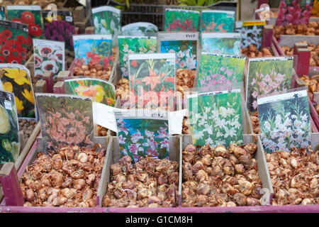 Flower bulbs on sale at Orticola fair in Milan, Italy - Stock Photo