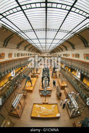 Skeletons of Dinosaurs, French National Museum of Natural History, Jardin des Plantes, Paris, France - Stock Photo