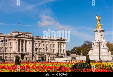 Spring tulips captured in front of Buckingham Palace, London, UK. - Stock Photo