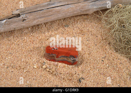 Jasper on beach - Stock Photo