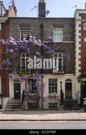 Richmond Green Wisteria growing on building - Stock Photo