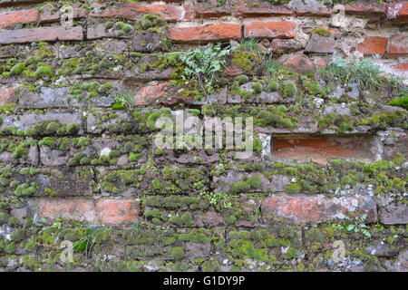 Old red brick wall covered by moss - Stock Photo