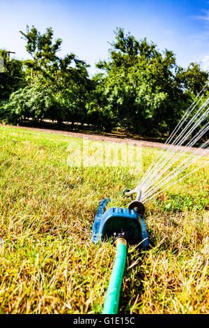 A hose end oscillating sprinkler on a large grass area - Stock Photo
