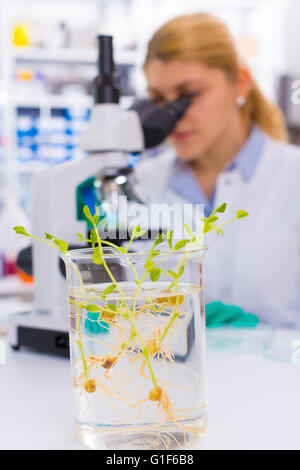 MODEL RELEASED. Female chemist using microscope with genetically modified plants in the foreground. - Stock Photo