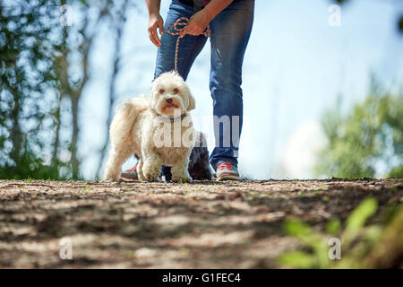 Havanese dog standing on sand of a beach at the river - Stock Photo