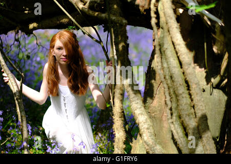 A slender young woman with long red hair and in a white dress peers between trees in a woodland with bluebells in - Stock Photo